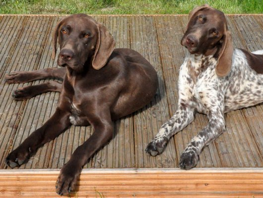 Jagdhunde brauchen Ruhephase