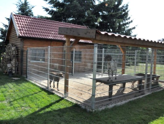 pension-hund-11_530