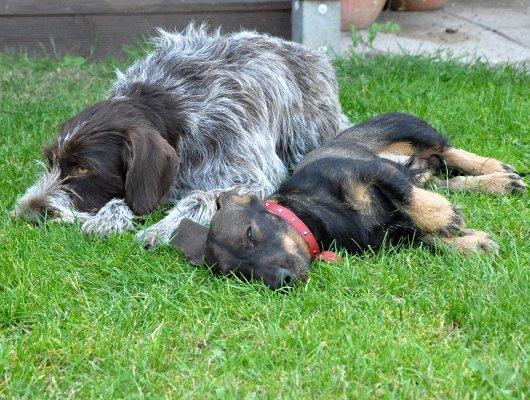 pension-hund-12_530