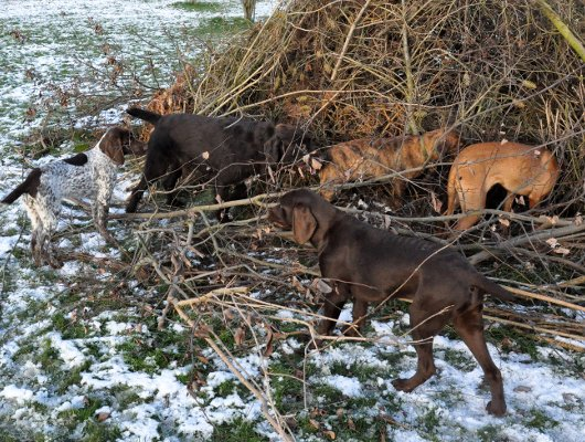 pension-hund-14_530