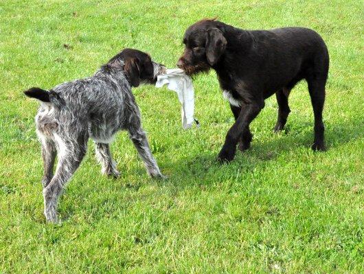 pension-hund-16_530