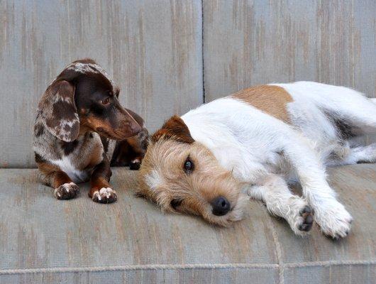 pension-hund-18_530