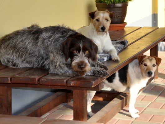 pension-hund-1_530