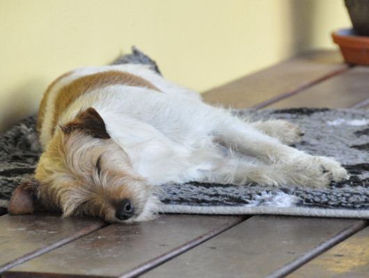 pension-hund-20_530