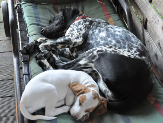 pension-hund-27_530