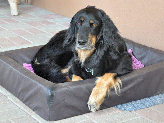 pension-hund-31_530