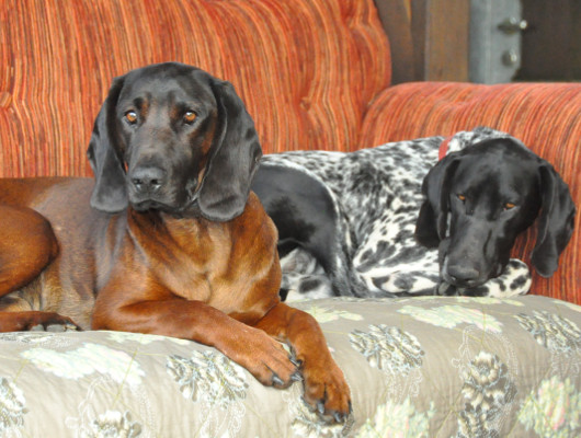pension-hund-34_530