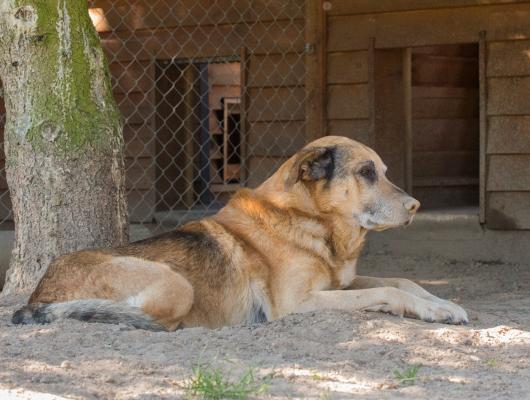 pension-hund-49_530