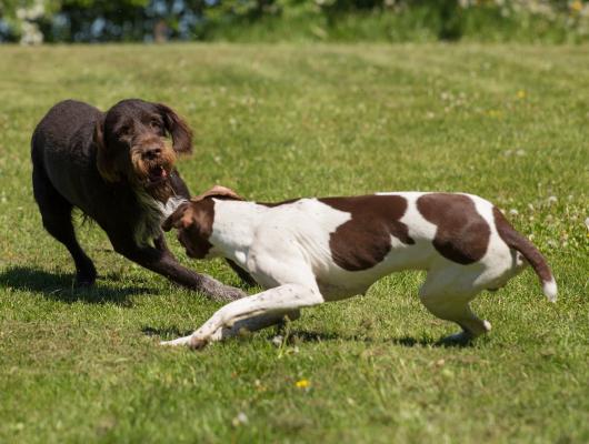 pension-hund-52_530