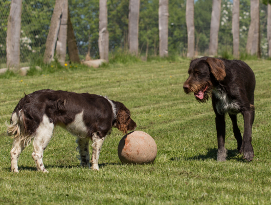 pension-hund-54_530