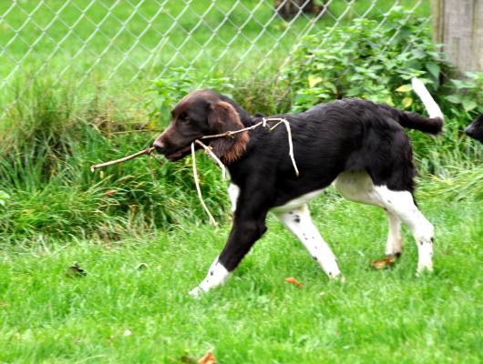 pension-hund-68_530