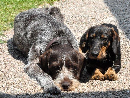 pension-hund-13_530