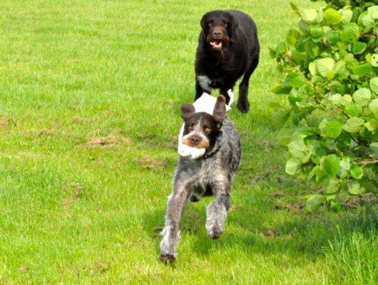 pension-hund-15_530