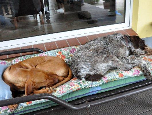 pension-hund-6_530