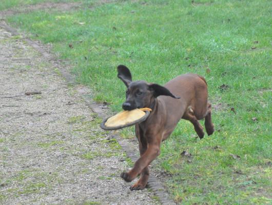 pension-hund-21_530