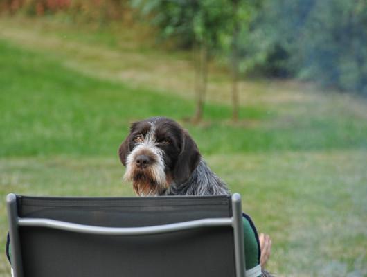 pension-hund-22_530