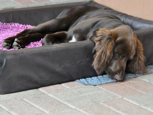 pension-hund-29_530