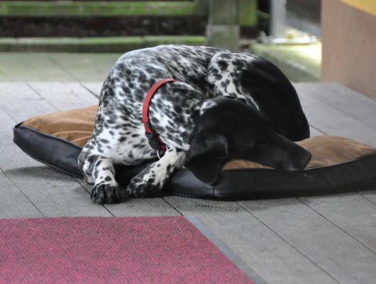 pension-hund-30_530