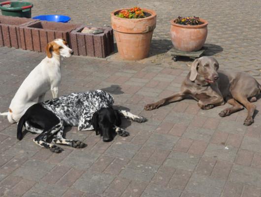 pension-hund-37_530