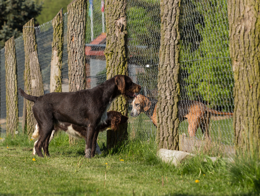 pension-hund-39_530