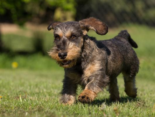 pension-hund-40_530