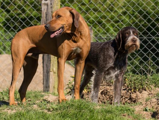 Hundepension Mecklenburg-Vorpommern Jagdhunde Astrid Willert