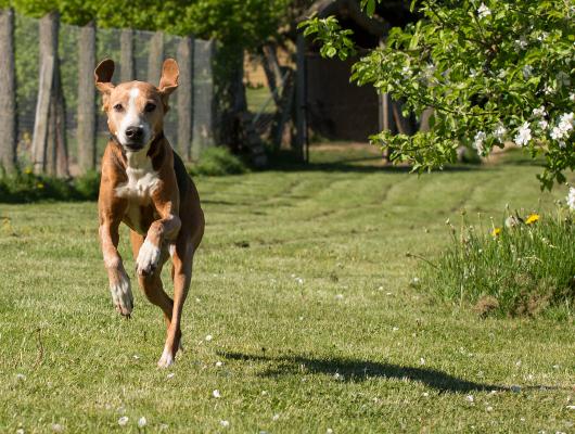 pension-hund-44_530