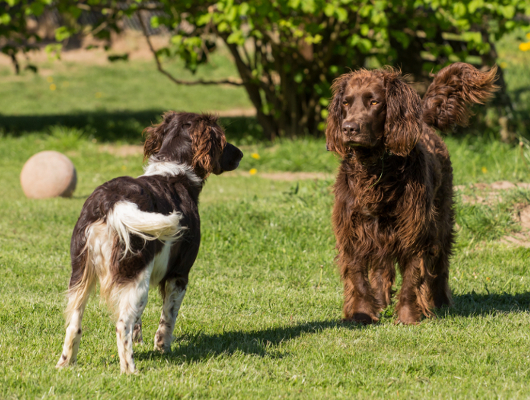 pension-hund-46_530