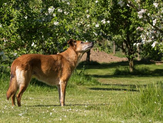 pension-hund-47_530