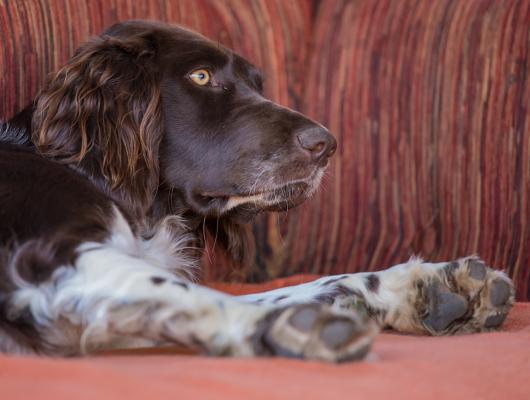 pension-hund-48_530