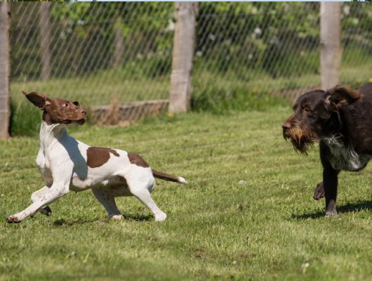 pension-hund-51_530