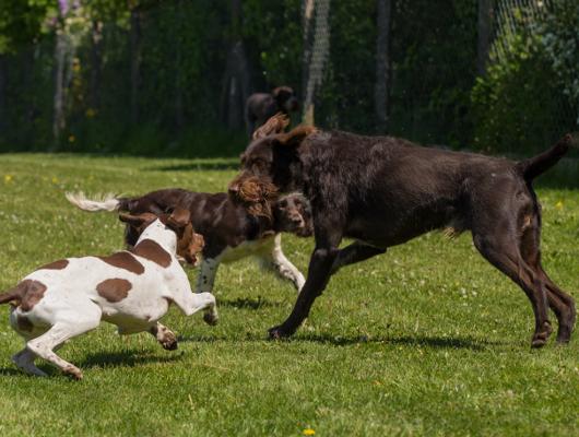 pension-hund-53_530