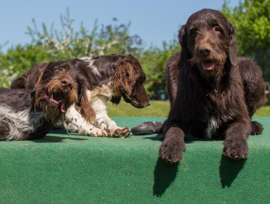 pension-hund-55_530