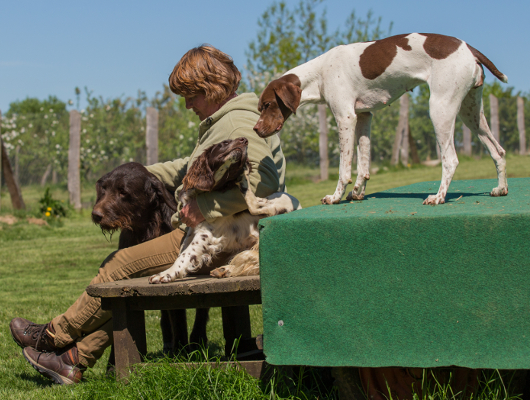 pension-hund-56_530