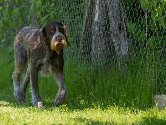 pension-hund-57_530