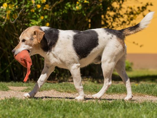 pension-hund-58_530