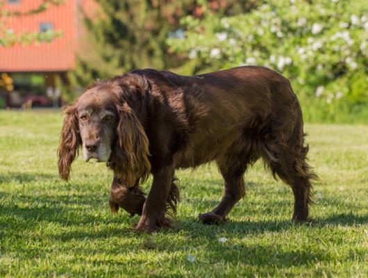 pension-hund-59_530