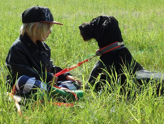 jagdhund-familienhund-001_530