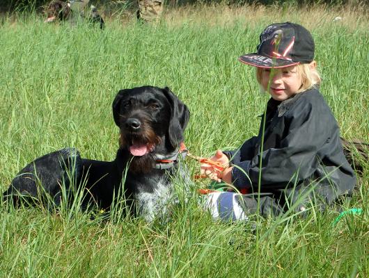 jagdhund-familienhund-008_530