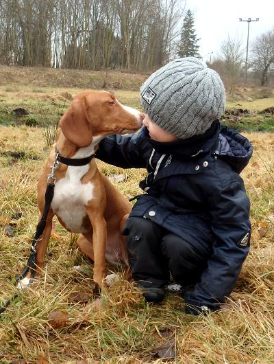 jagdhund-familienhund-010_530
