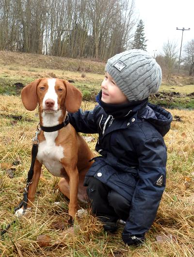 jagdhund-familienhund-011_530