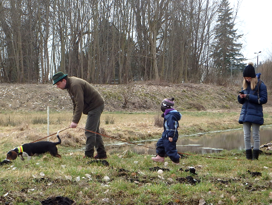 jagdhund-familienhund-012_530