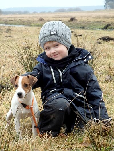 jagdhund-familienhund-013_530