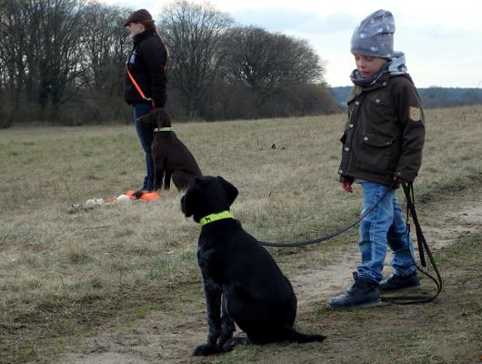 jagdhund-familienhund-018_530