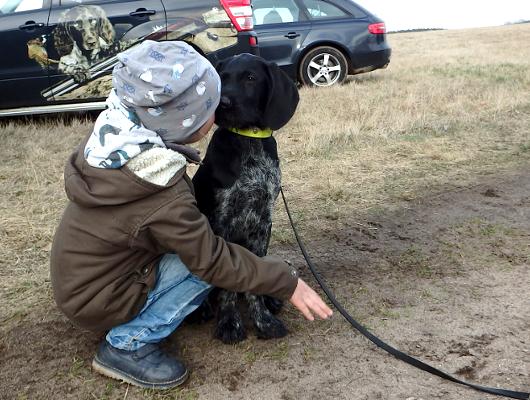 jagdhund-familienhund-019_530