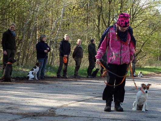 jagdhund-familienhund-020_530