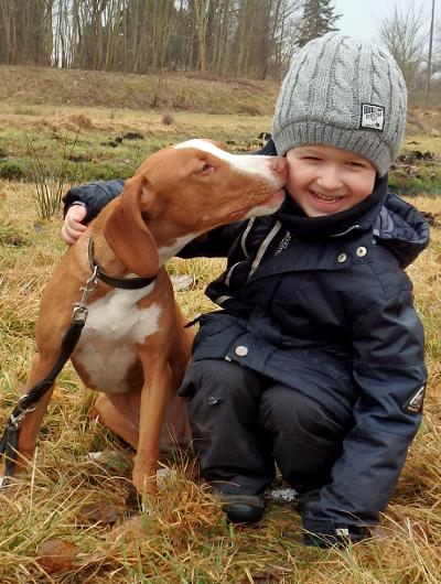 jagdhund-familienhund-022_530