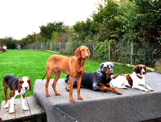 pension-hund-61_530