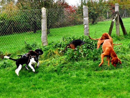 pension-hund-63_530