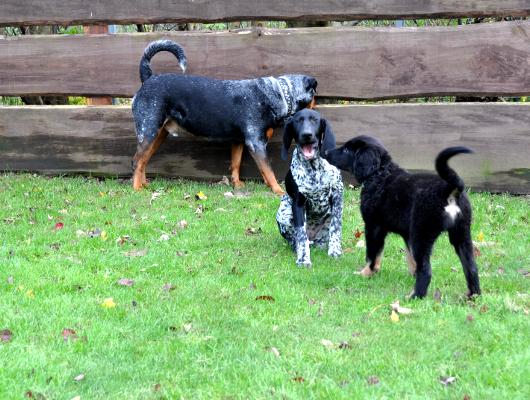 pension-hund-65_530
